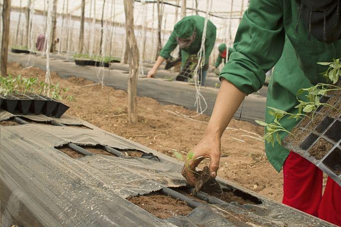 Starostlivosť o bio zeleninu