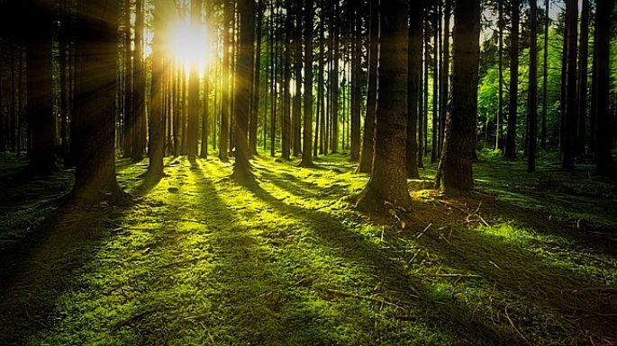 Zelené stromy v lese